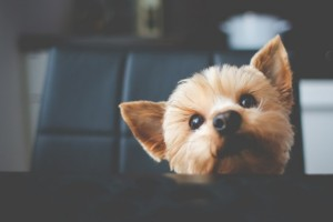 curso cuidar cachorros