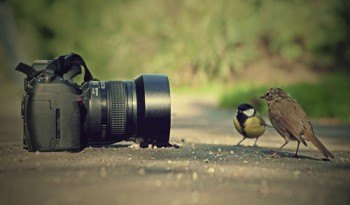 guia fotografia