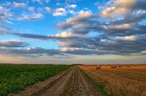 Curso gratis de agricultura ecológica