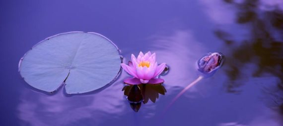 Curso gratis de meditación